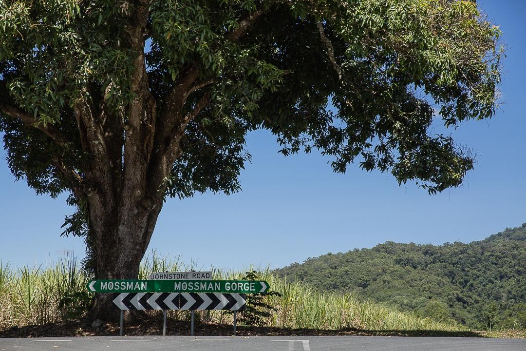 Road trip dans la forêt tropicale de Daintree #queensland #australie