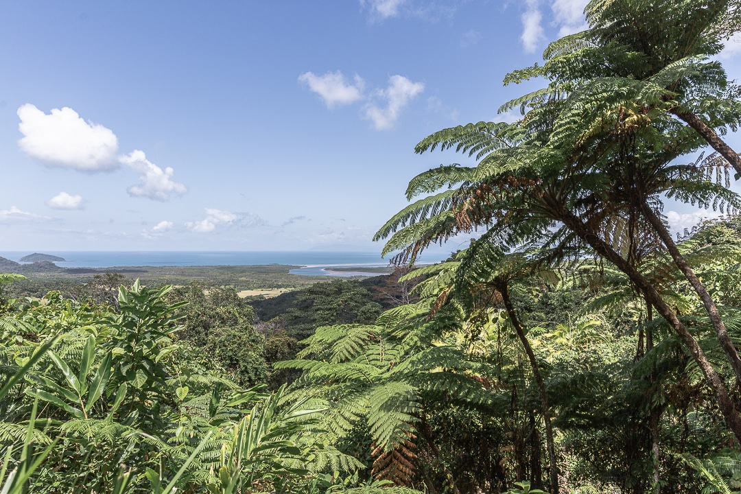Vue du Mont Alexandra dans la forêt de Daintree #queensland #australie