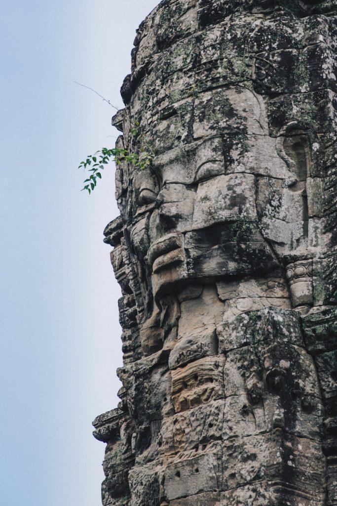 Poésie d'une branche à Angkor