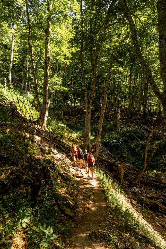 Randonnée en Albanie dans les forêts du parc national de Theth