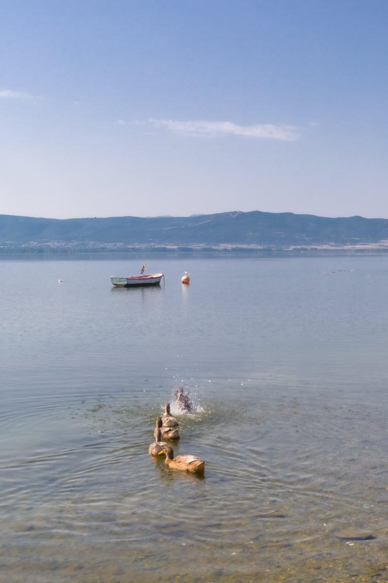 La douceur du lac Volvi près de Thessalonique en Grèce