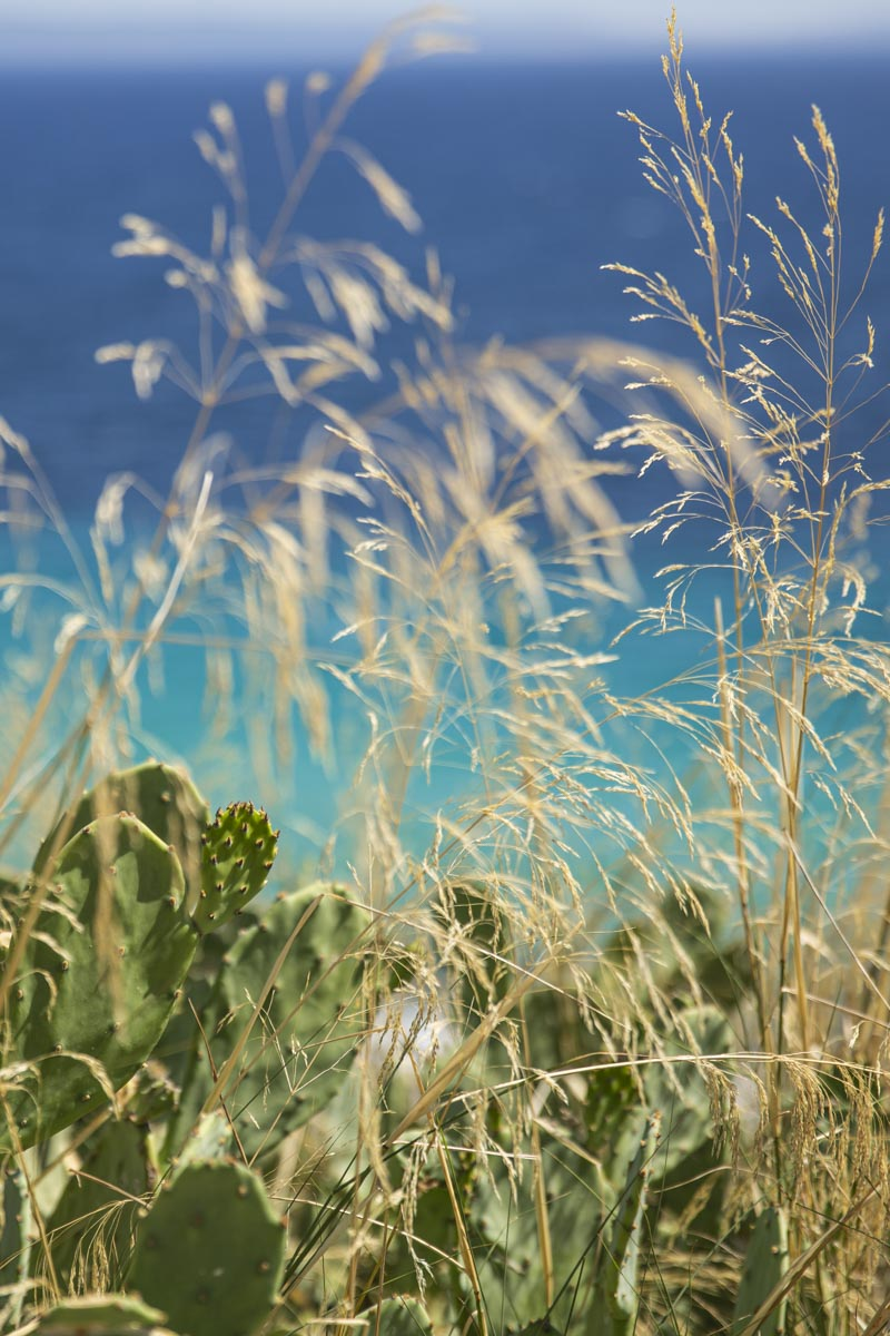 Herbes sur les hauteurs de la mer Egée sur Kassandra en Grèce