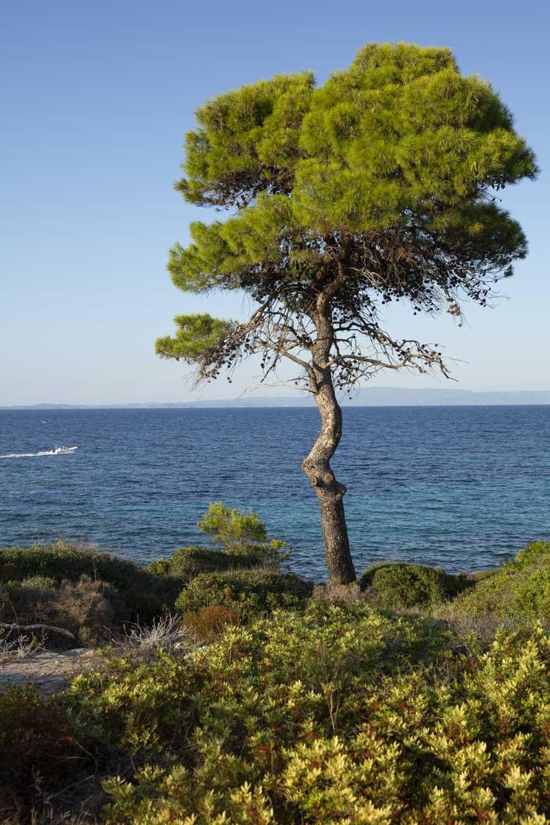 Péninsule de Sithonia, Grèce
