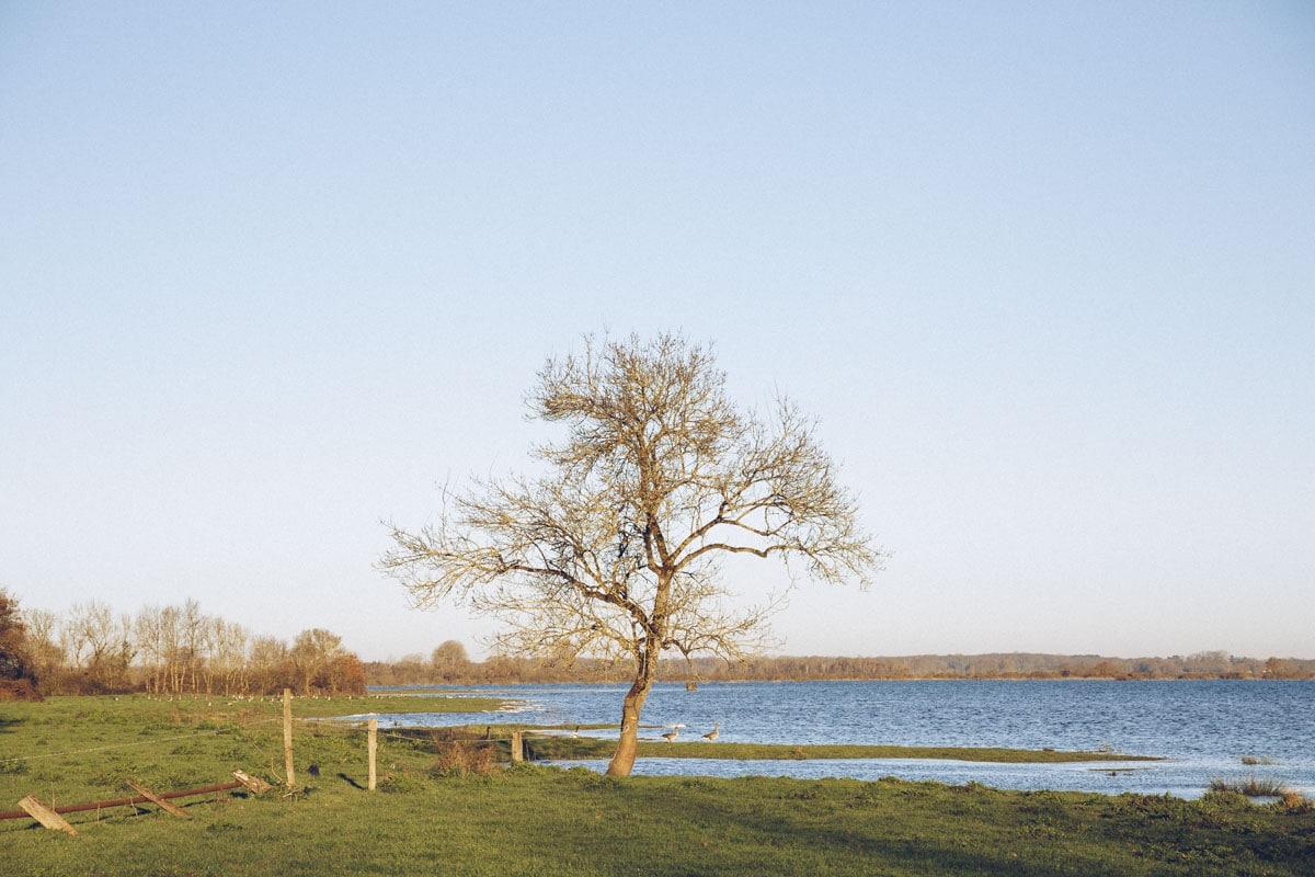 Plaine inondée sur le lac de Grand Lieu à Saint Lumine de Coutais - Loire Atlantique