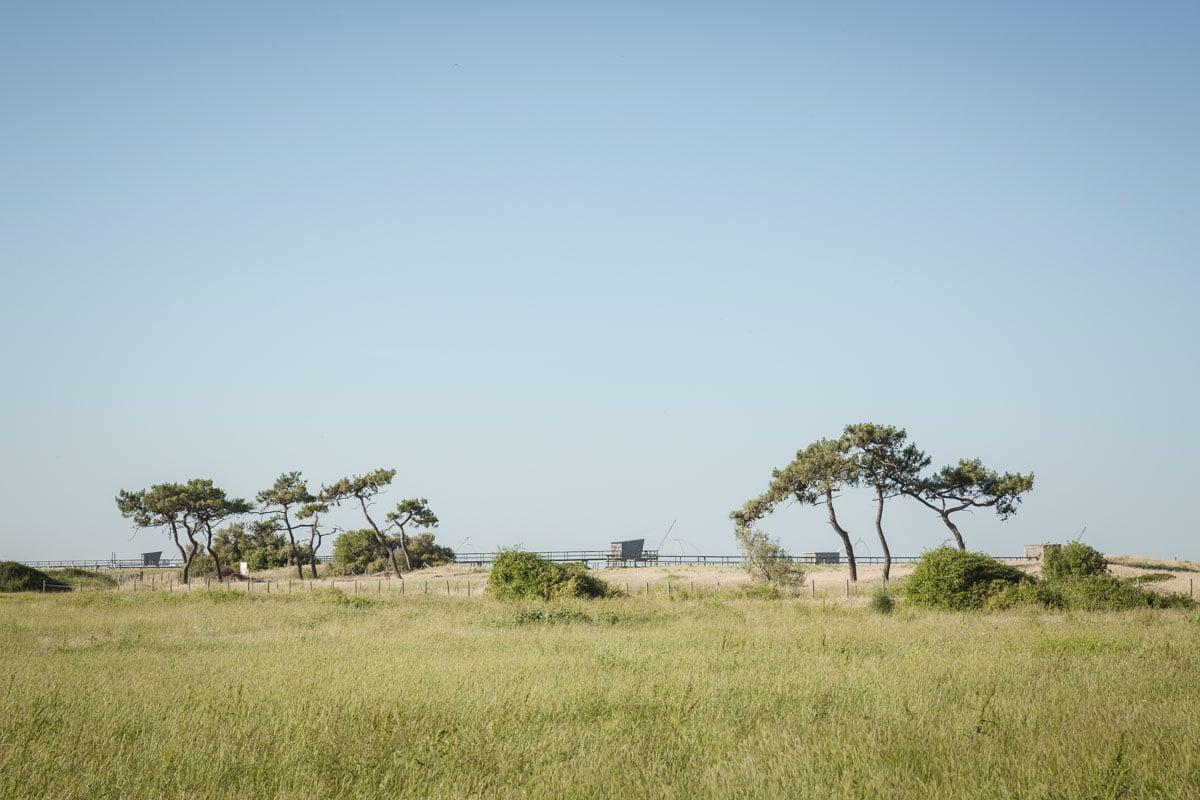 Les dune du marais du Lyarne en Loire Atlantique