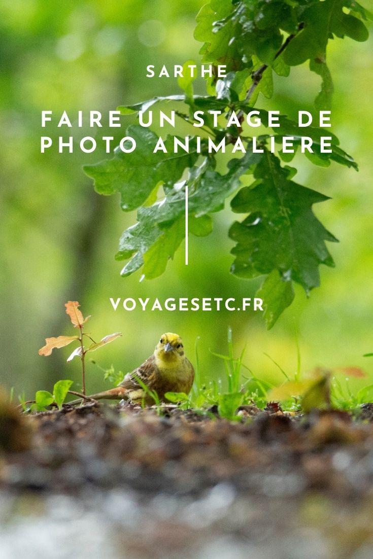 Découvrir la Sarthe côté nature : Forêt domaniale de Bercé ou Alpes Mancelles ?