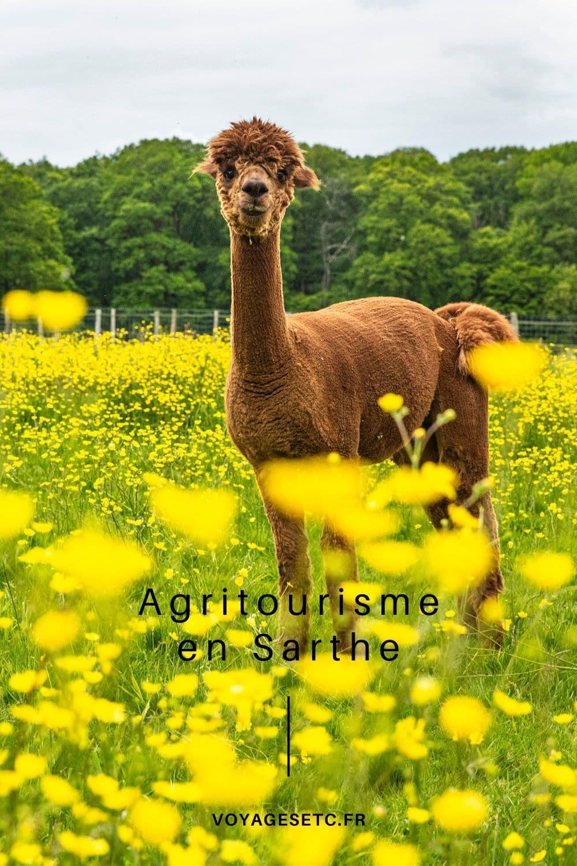 Découverte de l\'agritourisme en Sarthe en 3 rencontres