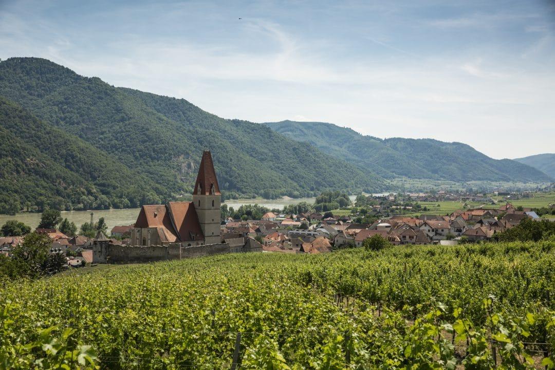 Vigne de Wassenkirchen dans la Wachau